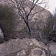 コブスタンの岩画